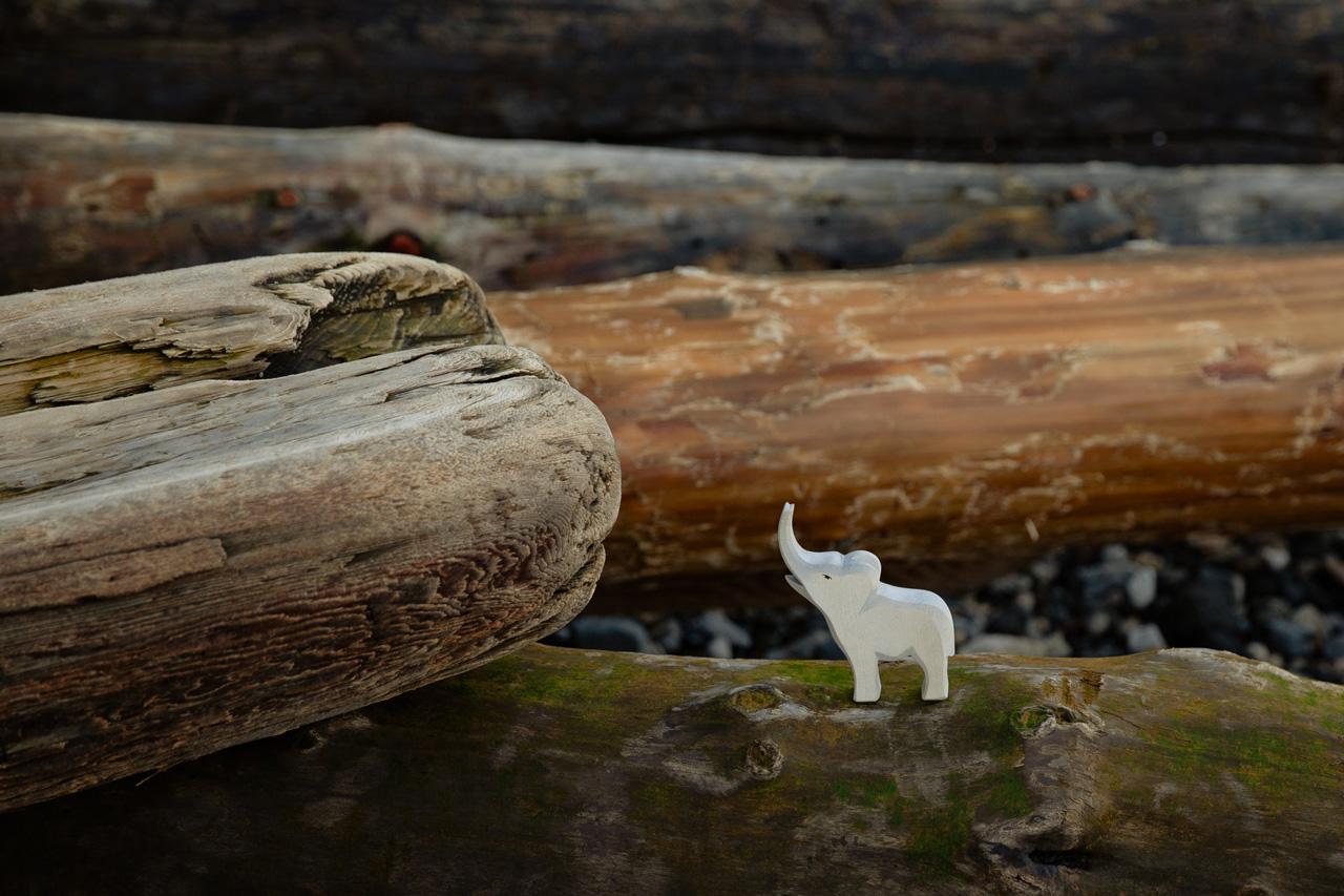 foto di Tatiana Syrikova da <a href='https://www.pexels.com/it-it/foto/legno-natura-foresta-animale-3932857/' target='_blank'>Pexels</a>