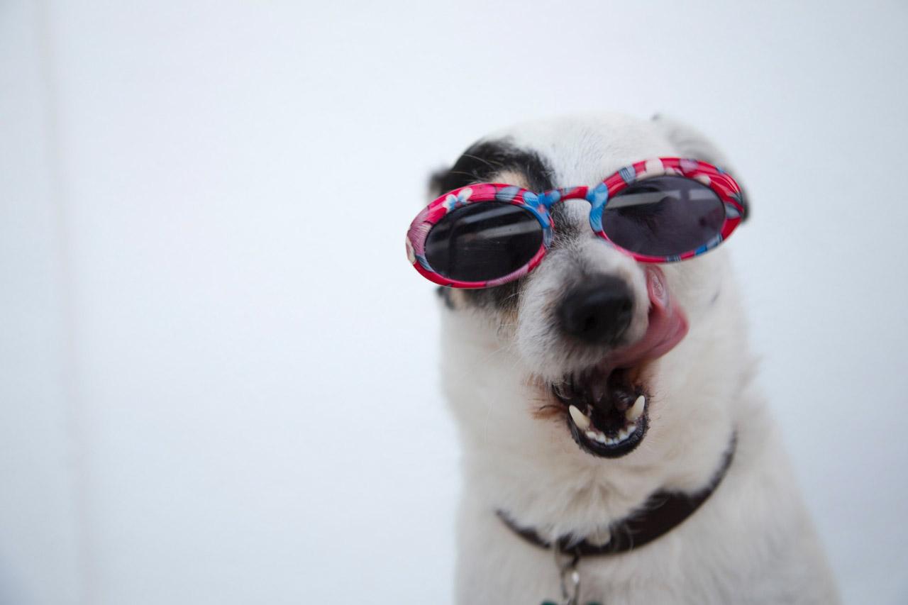 foto di Ilargian Faus da <a href='https://www.pexels.com/it-it/foto/adorabile-animale-animale-domestico-cane-1629781/' target='_blank'>Pexels</a>